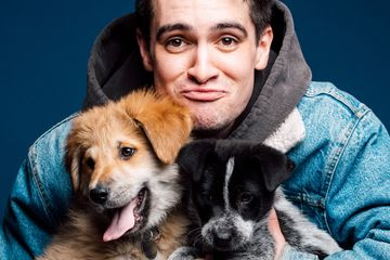 Brendon Urie Played With Puppies While Answering Fan Questions And It's Adorable
