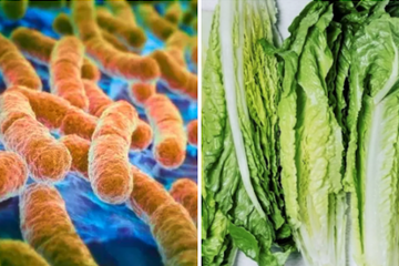 Throw Out Your Romaine Lettuce Because It Could Be Contaminated With E. Coli