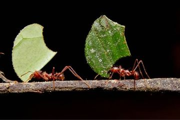 Humans are more like ants than lone wolves