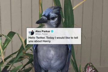 Henry's touching story from a scruffy little bird to a bug-catching virtuoso (17 Photos)