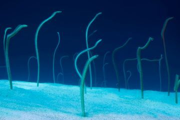In the Garden of Eels