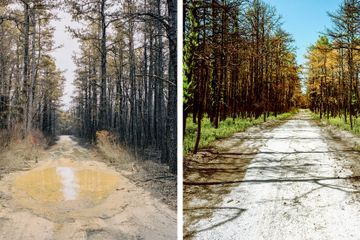 Scenes from a Charred Forest, Bursting With New Life