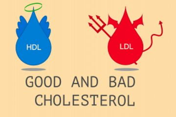 Can You Have Too Much 'Good' (HDL) Cholesterol?