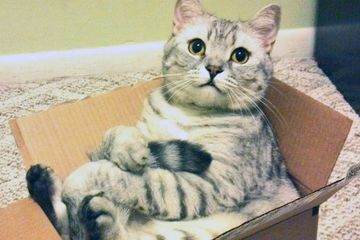 Cats and boxes; a love stronger than PB n' J (16 GIFs)