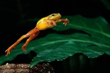 What a Frog Needs to Make That Leap