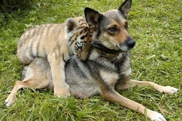 Animal friendships are more pure than anything on earth (27 Photos)