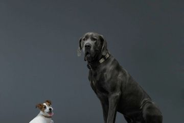 Why Don't Big Dog Breeds Live As Long As Small Dog Breeds?