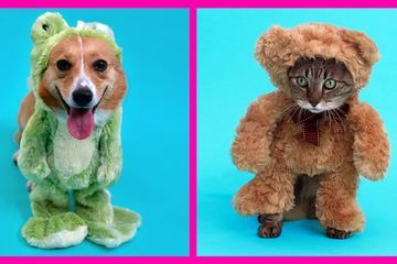 Easy DIY Pet Costume