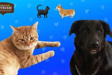 Couples Foster A Dog And A Cat At The Same Time Presented by Nutrish