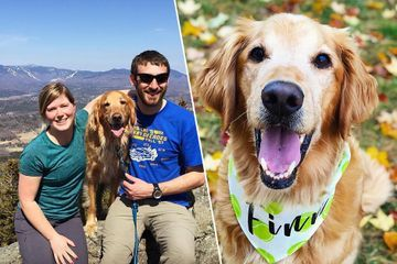 Good boy Finn won't let cancer stop him from completing his bucket list (19 Photos)