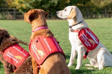 Dogs Can Detect Malaria. How Useful Is That?