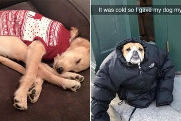 These bundled up pups are ready for the cold (31 photos)
