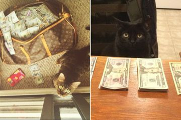 Forget the banks, we're putting cats in charge of our money (30 Photos)