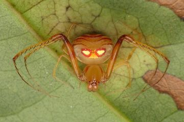 Photo: Pirate spider or alien, you decide