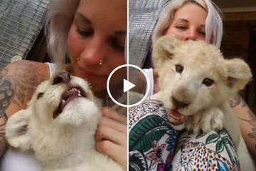 Girls and lion cubs have a lot in common, they're both adorable yet terrifying (Video)