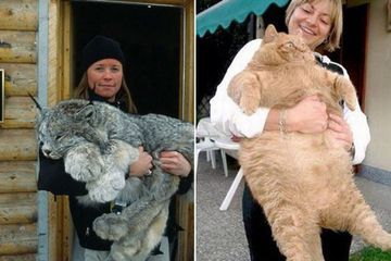 Girls show off their huge, hairy… cats (32 photos)