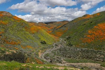 Photo: Canyon erupts in a poppy superbloom