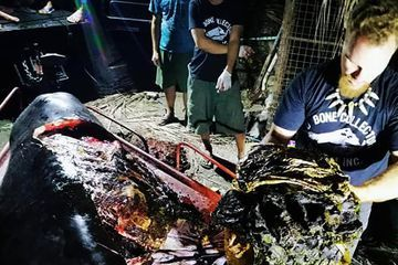 88 Pounds of Plastic Found in Dead Whale in the Philippines