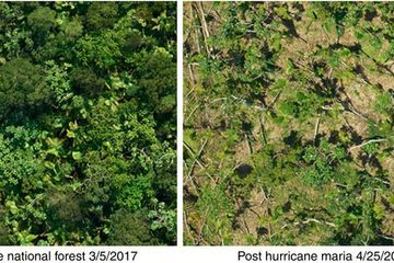 Hurricane Maria inflicted tree damage unprecedented in modern times