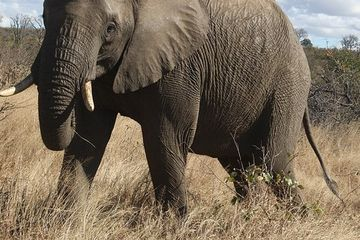 Suspected rhino poacher killed by an elephant, eaten by lions