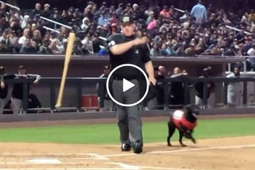 Welp that's it folks, we've found the world's meanest umpire (Video)