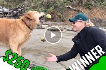 Juggling dog has been voted best in show! (Video)
