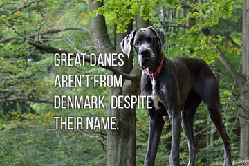 The strange origins of dog breed names (19 Photos)