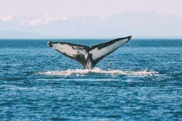 Humpback Whales, Glaciers And Northern Lights – The Most Magical Experience Aboard Celebrity Cruises Solstice To Alaska