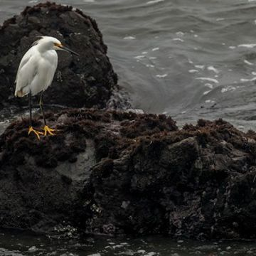 Photo: Snowy egret shows off its fancy feet