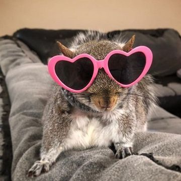 Meet Thumbelina, the rescue squirrel who was given another chance (15 Photos)