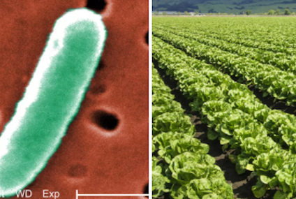 Romaine Lettuce E. Coli Outbreak Now In 22 States, And Even More People Are Getting Sick