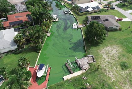 Algae Bloom in Florida Prompts Fears About Harm to Health and Economy