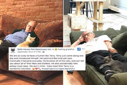 A man who volunteers at a shelter to nap with cats, is the hero we need (12 Photos)