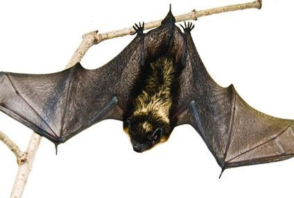 Why you should go to bat for … bats