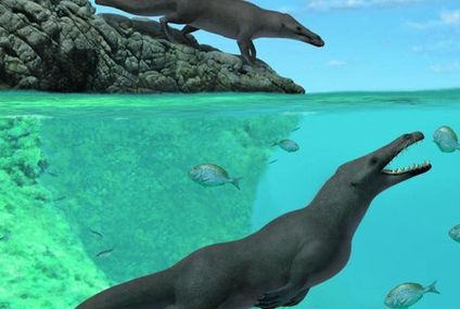 Ancient four-legged whale with webbed feet and toe hooves discovered in Peru