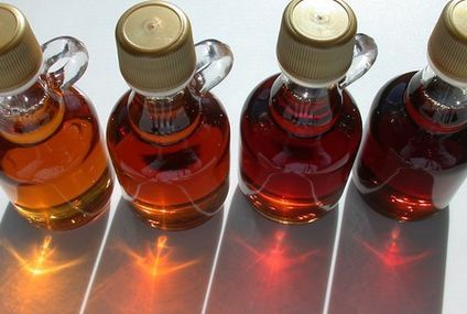 Maple syrup: a sweet solution for farmers?