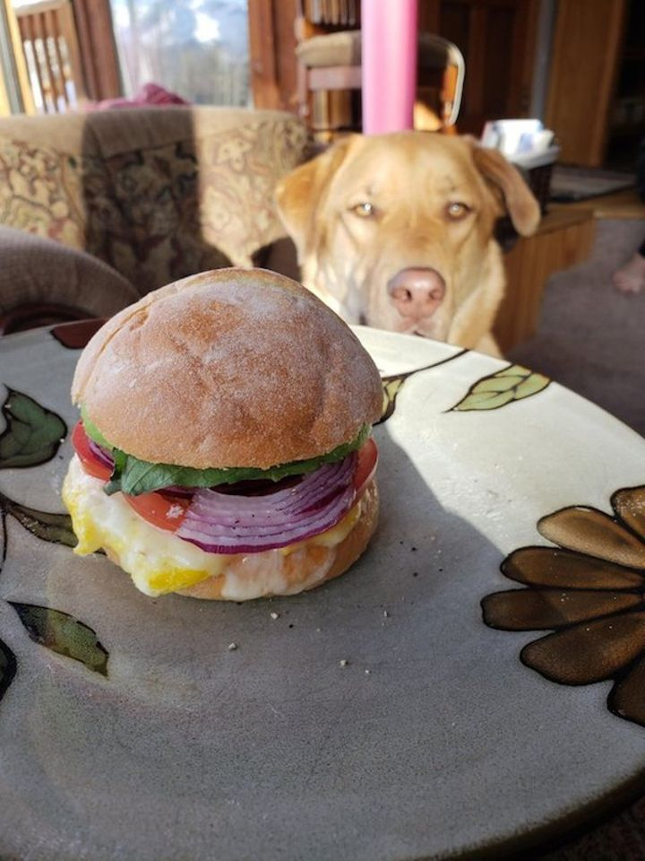 we-wish-our-pets-would-look-at-us-the-way-they-look-at-our-food-x-photos-7.jpg?quality=85&strip=info&w=600