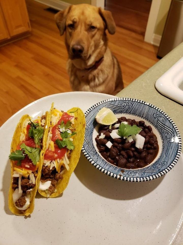 we-wish-our-pets-would-look-at-us-the-way-they-look-at-our-food-x-photos-25-3.jpg?quality=85&strip=info&w=600
