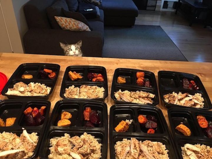 we-wish-our-pets-would-look-at-us-the-way-they-look-at-our-food-x-photos-25-6.jpg?quality=85&strip=info&w=600