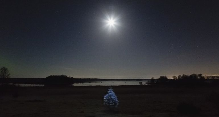 Photo: A tree glows in Sweden
